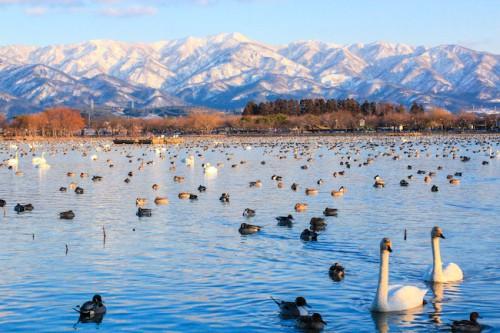 瓢湖の冬景色