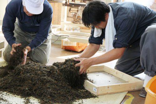 宇治茶の産地で始めた南山城紅茶プロジェクト