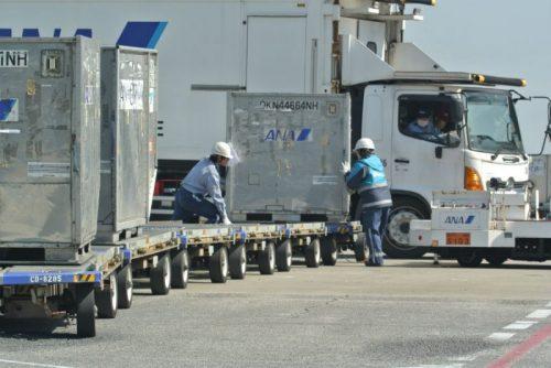 搭乗橋の着脱や手荷物・貨物の搭降載などを行う「グランドハンドリング」