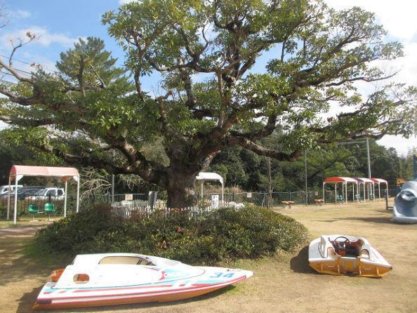 親子レストラン「KINOBUTA」の建設予定地。中央は店名の由来となった樹齢80年のタブノキ