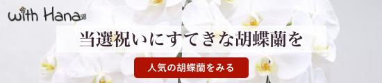 当選祝いにすてきな胡蝶蘭を